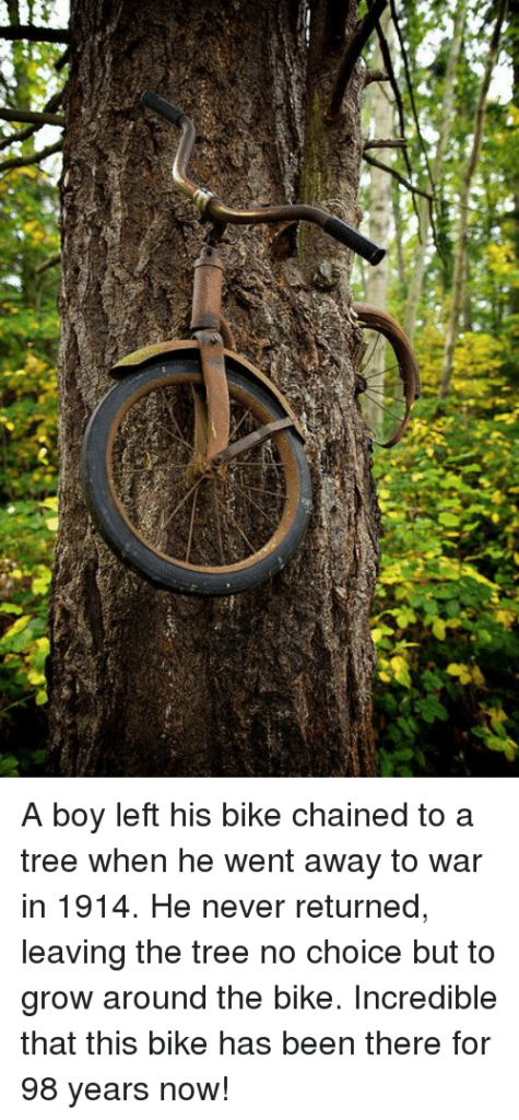 A-boy-left-his-bike-chained-to-a-tree-when-6035806-475x1024